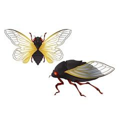 Cicada vector