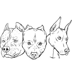 Draw in black and white heads dogs pitbull vector