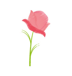 Drawing pink rose flower spring vector