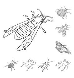 Fauna and entomology icon vector