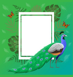 frame with peacock tropical plants and vector image