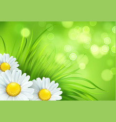 frash spring green grass and chamomile background vector image