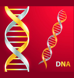 gold and silver dna icon on vector image