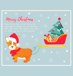 Holiday greeting card with cute corgi dog vector