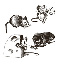 mouse or rat animal sketched set vector image