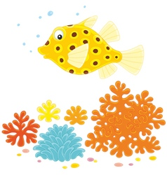 Yellow boxfish vector