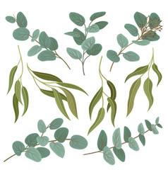 collection of twigs with fresh green leaves vector image