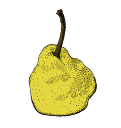 colorful engraving of a pear vector image