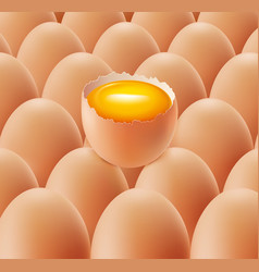 fresh farm eggs group vector image