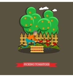 Picking tomatoes concept in vector image