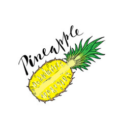 The cut fruit of pineapple on a white background vector
