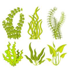 underwater seaweed elements vector image vector image