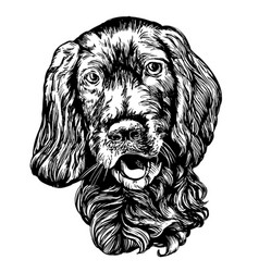 dog spaniel pet hand drawn vector image