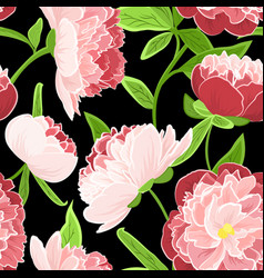 Peony rose pink flowers seamless pattern on black vector
