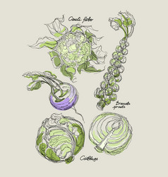 drawing of cabbage set vector image vector image