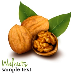 Walnuts and a cracked walnut vector image