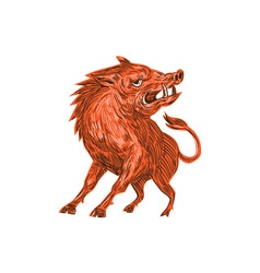 Angry Razorback Ready To Attack Drawing vector image vector image