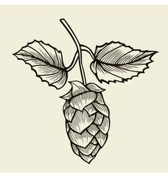Beer hop vector