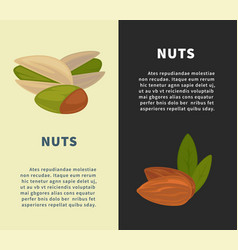 Nuts promotional vertical posters with almonds vector