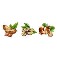 nuts set watercolor pistachio hazelnut vector image
