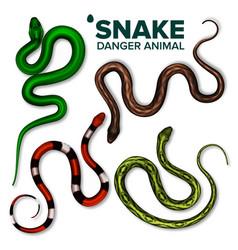 Snake collection of wild danger animal set vector