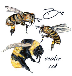 collection realistic bee bumblebee realistic style vector image