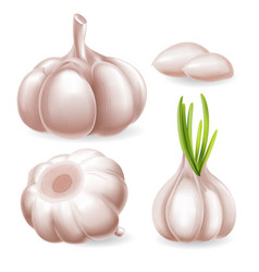 garlic set vector image