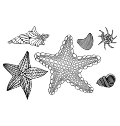 Shells and star vector