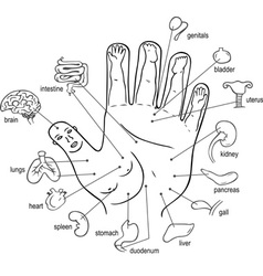 Acupuncture points on palm vector image