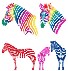 Colorful zebras set vector image vector image
