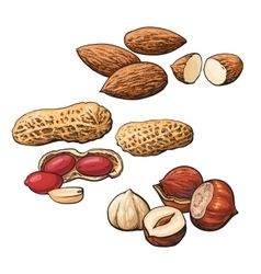 Collection of almond hazelnut and peanut heaps vector