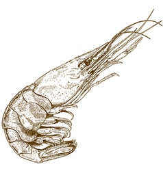 Etching shrimp vector