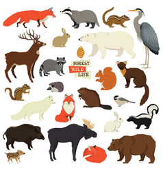 Forest wildlife isolated objects animals vector