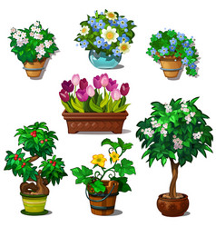 set domestic and garden plants in vase and pots vector image