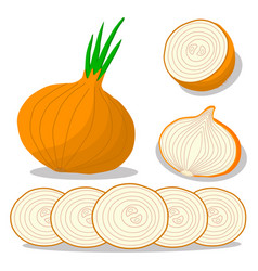 Vegetable round onion vector