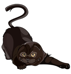 Cartoon black lop eared cat twisted vector