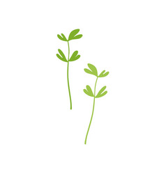 Fresh green fenugreek leaf vegetarian healthy vector