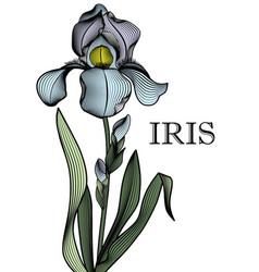 outline of a contour iris vector image