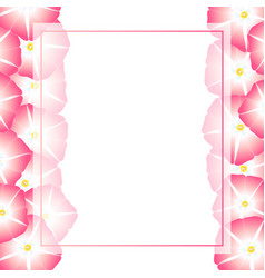 Pink morning glory flower banner card border vector