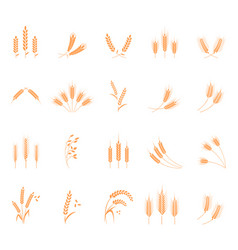wheat set of icons vector image vector image