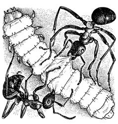 ants attacking larva vector image vector image