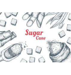 collection sugarcane cane sugar and sugarcane vector image