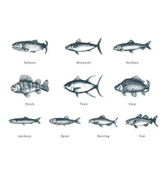 fishes on white background drawn vector image