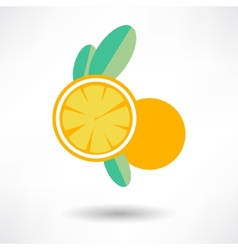 icon orange fruit isolated on White background vector image