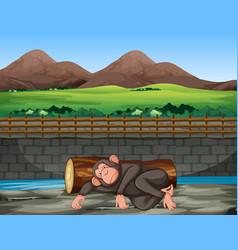 Scene with sad monkey in zoo vector