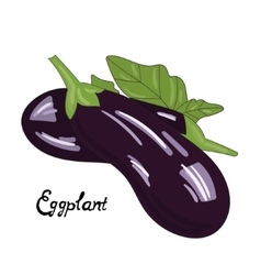 Vegetable eggplant vector