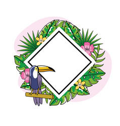 diamond emblem with toucan and tropical flowers vector image