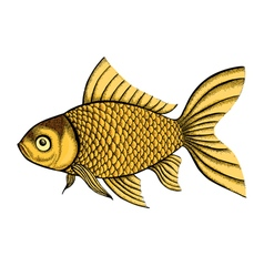 Fish painted in a graphic style vector