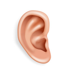 Human ear organ hearing health care closeup vector