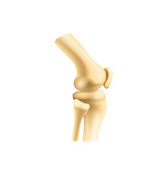 Knee or elbow bones joint isolated vector